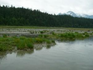 The destination: Mud Bay Road across the creek.