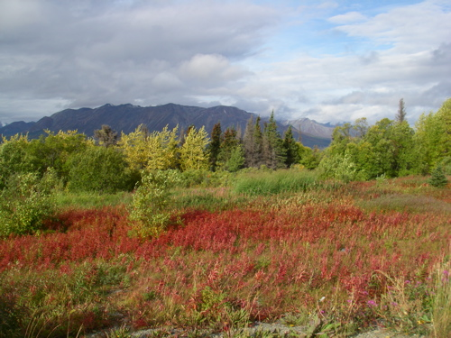 autumn colors on Haines Road