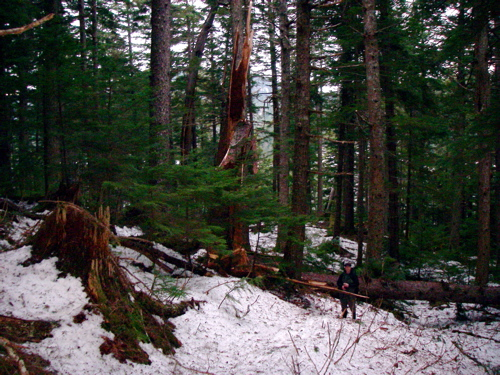 """sword of damocles"" tree falls across the trail"