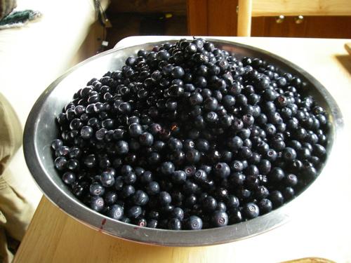 Alaska blueberries--finest kind!