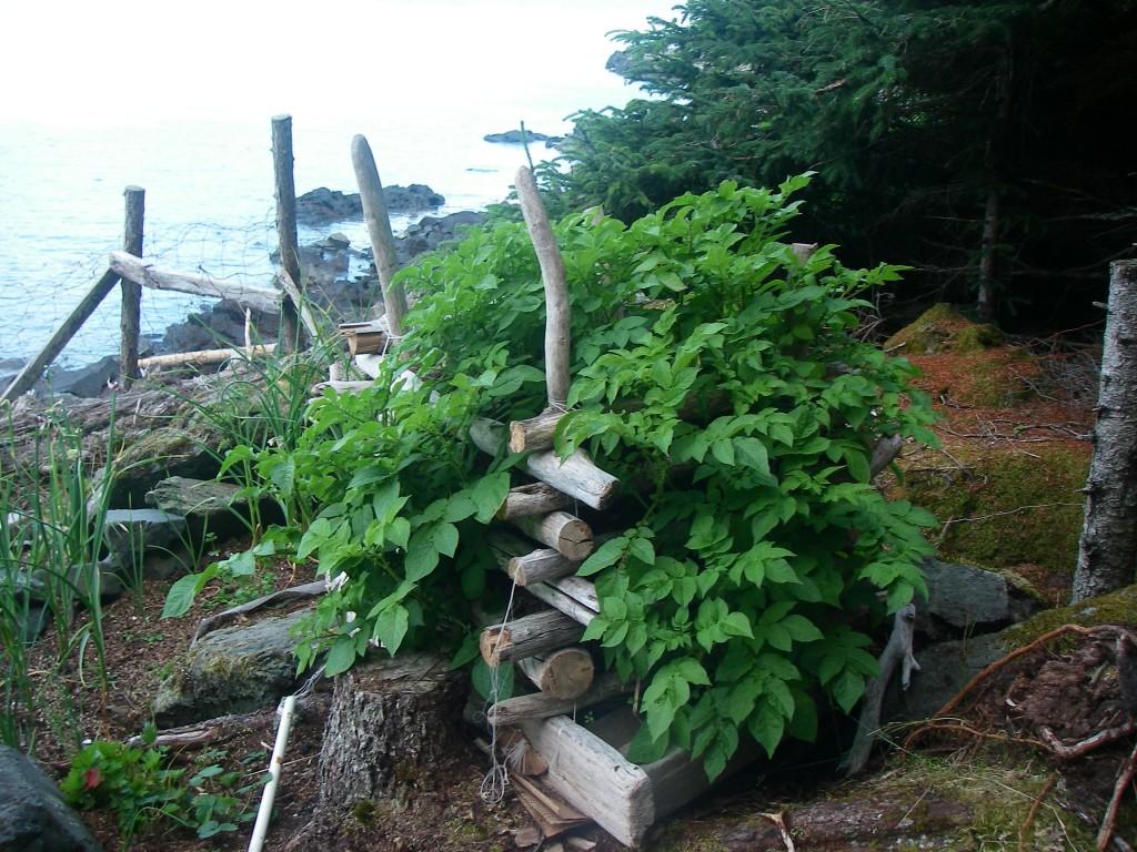 July Potato Tower