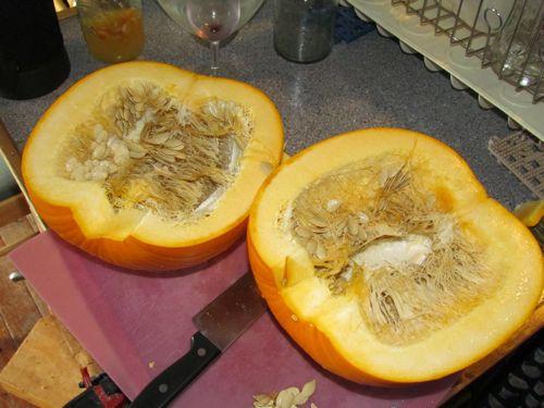 Stored 11 months, this pumpkin is still fresh and ready for Pumpkinpalooza (Photo: Mark A. Zeiger)