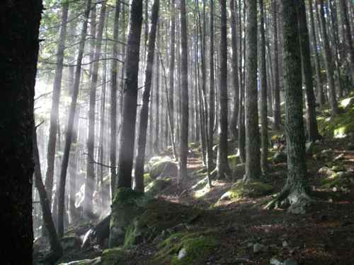 The forest: it's good for you! (Photo: Mark A. Zeiger).