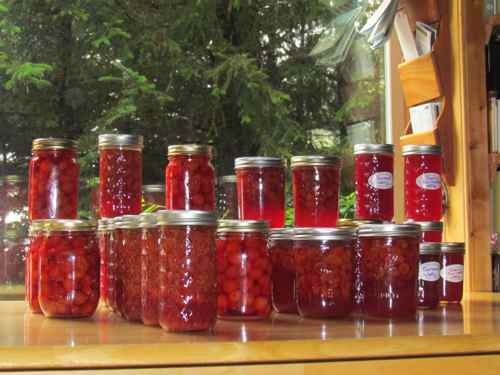 Seeing red! Cherries and red currants in various combinations (Photo: Mark A. Zeiger).