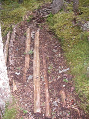 "A section of the old ""corduroy"" logs (Photo: Michelle L. Zeiger)."