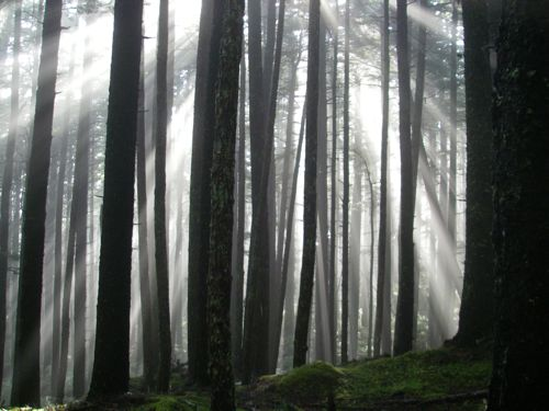 This is a forest that offers mystery! (Photo: Mark A. Zeiger).