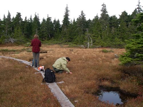 Mark and Aly picking bog cranberries (Photo: Michelle L. Zeiger).