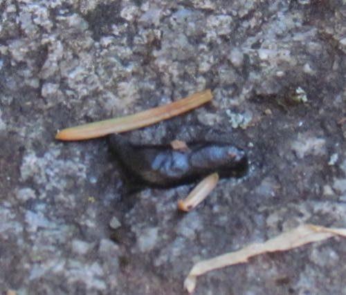 slug killed by salt