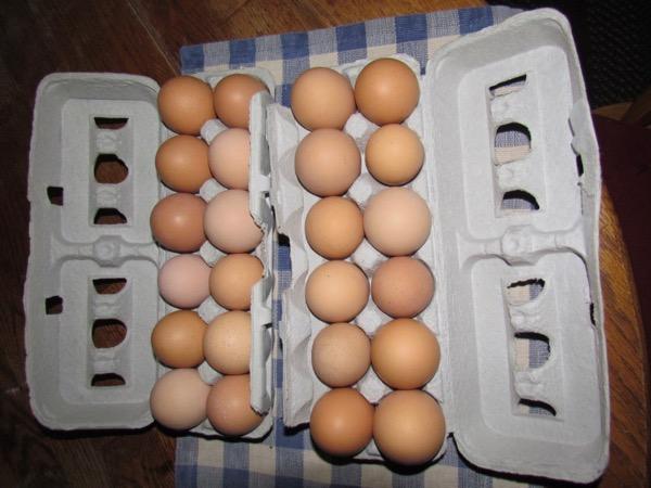 local chicken eggs